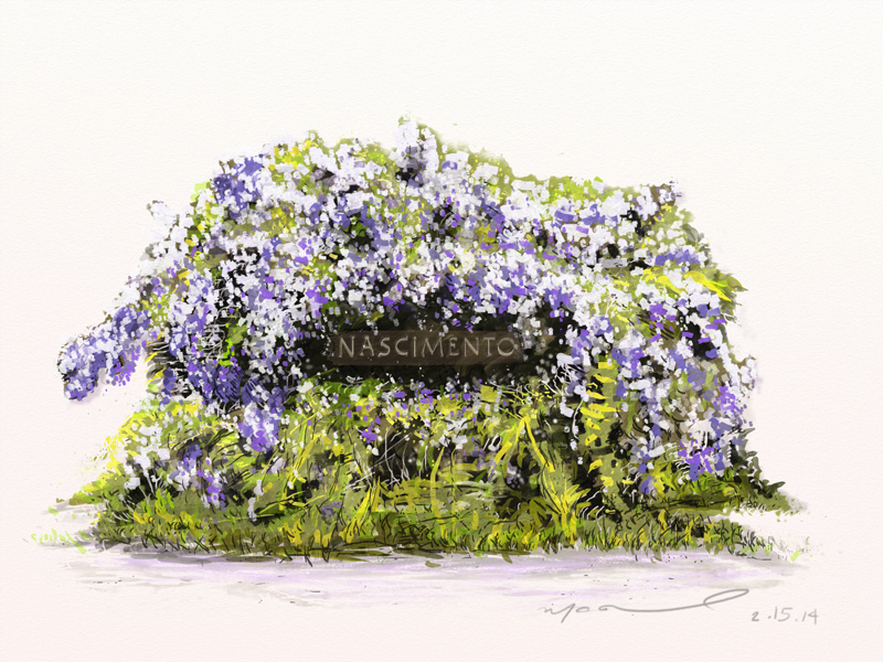 wysteria bush digital illustration by camilo nascimento ithaca artist